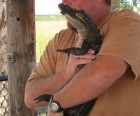 Cuddle with an Alligator in the Everglades
