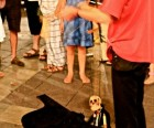 Avignon has a  fun street life at night. Puppeteers entertain children.