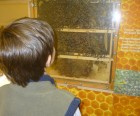Observation Beehive