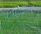 Wildlife can be spotted everywhere, like this heron