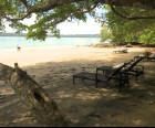 The beach offers lots of shade and some friendly iguanas