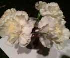 Place white carnations or daisies in warm water