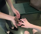 Visitors can touch Rosie, a live tarantula