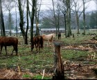 The horses look beautiful grazing in the pasture