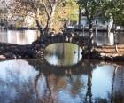 The Pond at Hecksher Park