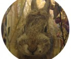 A rabbit hides behind this peephole.