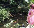 Koi pond at the Botanical Center