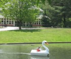 Swan boats gliding by the Carousel Village