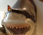 Why is there a butterfly on the shark's nose? Visit and find out!