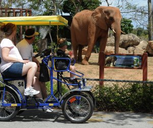 The Best Zoo in Every State: Zoo Miami