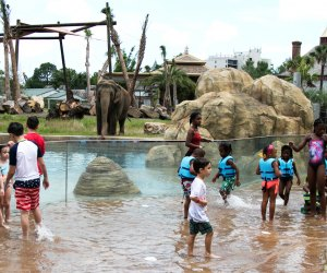 The Best Zoo in Every State: Audobon Zoo