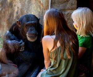 The Best Zoo in Every State: North Carolina Zoo