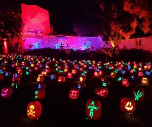 Nights of the Jack Is Now Open: Acres and acres of pumpkins