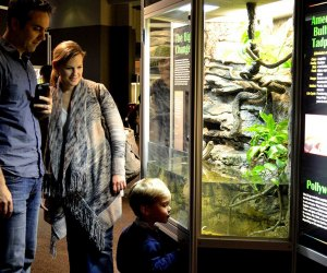 25 Things To Do with Chicago Preschoolers Before They Turn 5: The Peggy Notebaert Nature Museum