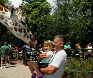 The Best Zoo in Every State: Brookfield Zoo