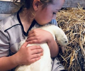 Best Farms for Family Fun and Entertainment in Chicago: child holding a baby goose