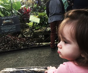 20 Things To Do with Chicago Babies Before They Turn One: Garfield Park Conservatory