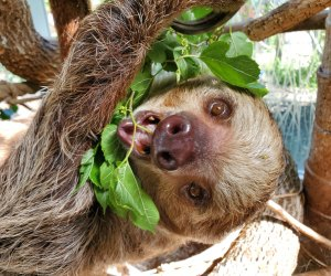 The Best Zoo in Every State: Roger Williams Park Zoo
