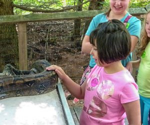 The Best Zoo in Every State: Squam Lakes Natural Science Center