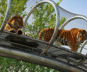 The Best Zoo in Every State: Philadelphia Zoo
