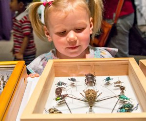 Bugfest. Photo courtesy of Academy of Natural Sciences