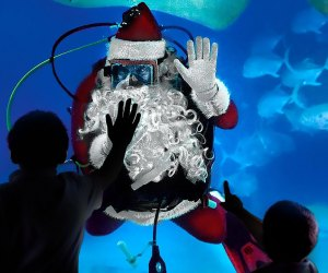 Santa will swim into the Adventure Aquarium this weekend. Photo courtesy of the aquarium