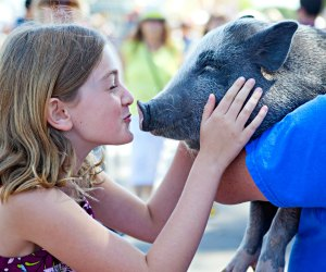 How can you resist a face like that! Dare to kiss a pig at America's Family Pet Expo. Photo by Keren Lynn Photography