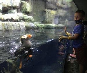 Aquarium of the Pacific puffins