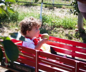 As part of the seasonal festivities enjoy apple-themed games thoughout the day at Harbes Family Farm. Photo courtesy of the farm