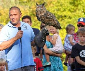 Birds of prey are on display at Hawk Watch. Photo courtesy of Audubon Greenwich