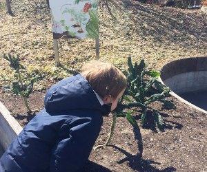 the children's discovery garden brooklyn botanic garden boy smelling flower