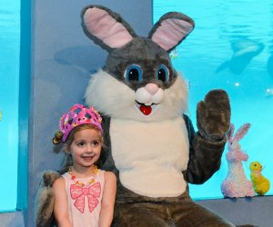 The Easter Bunny will return for a spring- and sea-creature-themed breakfast this year. Photo courtesy of Mystic Aquarium