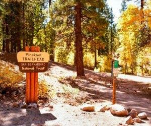 Fall Foliage near Los Angeles: Hike in Big Bear