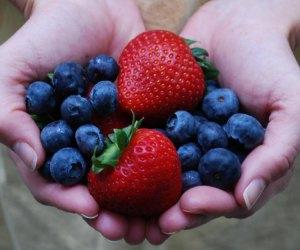Berry picking at Blessington Farms. Photo courtesy the farm