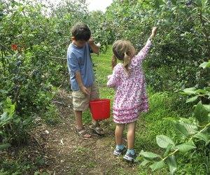 Two kids picking bluberries at Fishkill Farms