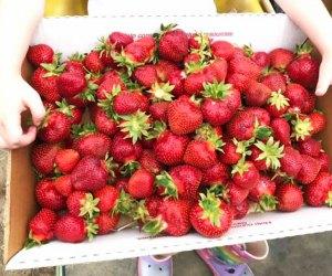 box full of fresh strawberries