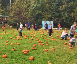 Take a train to the pumpkin patch! Photo courtesy of Connecticut Trolley Museum