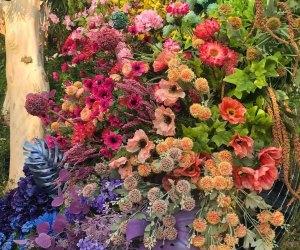 The DiscOasis at South Coast Botanic Garden: flowers dot the grounds