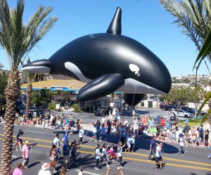 Dana Point Festival of Whales. Photo courtesy of the Ocean Institute