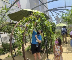 Visiting the Natural History Museum with Kids: Butterfly Pavilion
