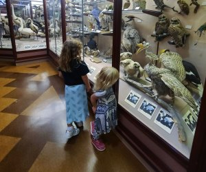 Visiting the Natural History Museum with Kids: Hall of Birds