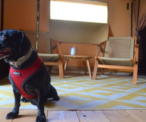 Huttopia Paradise Springs: Discover the Best New Glamping near Los Angeles: pet-friendly