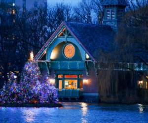 Christmas trees float on the Harlem Meer in Central Park