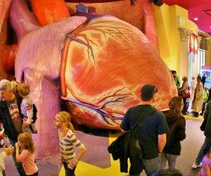Franklin Institute's famed heart