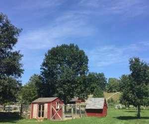 Admission is free at Muscoot Farm