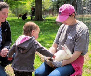 Natick Community Organic Farm's annual Spring Spectacular has lots of outdoor farm fun including meeting baby farm animals in the petting pasture. Photo by Kori Feener for NCOF