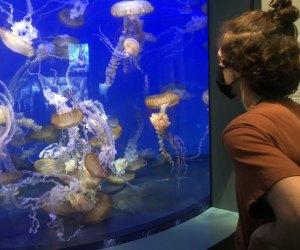 Aquarium of the Pacific - sea jellies