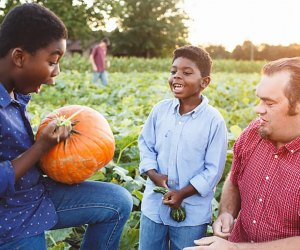 Pick pumpkins and enjoy other fall fun every weekend at Johnson's Corner Farm. Photo courtesy of the farm