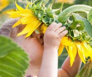 Child smelling sunflowers at Johnson's Loucust Hall Farm