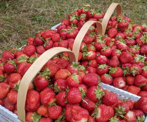 Basket of strawberries at Jones Family Farm
